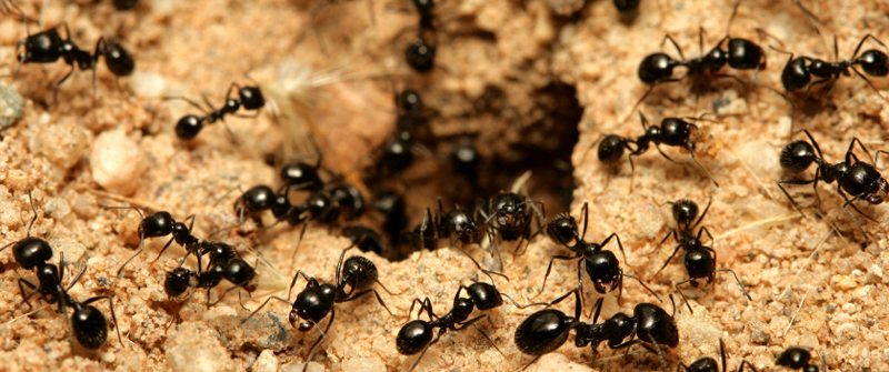 Dealing with ants